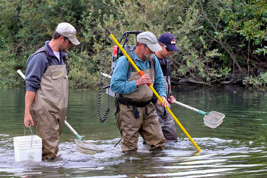 Native fish ecohealth report cards for Willamette river fishing report