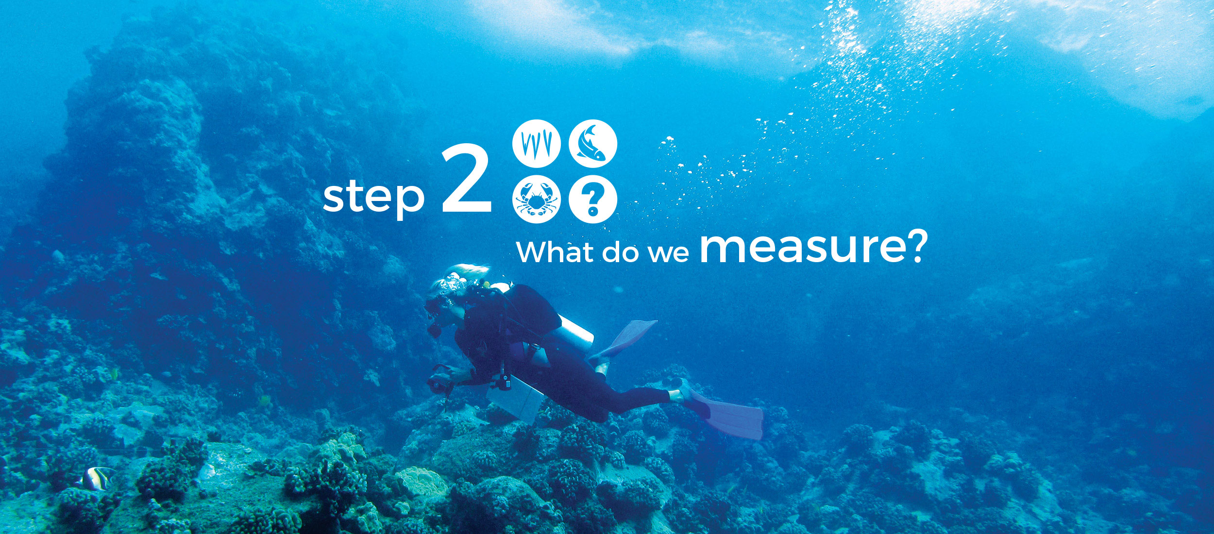 Step 2 What do we measure?